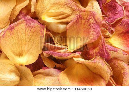 Dry Petals Of Rose
