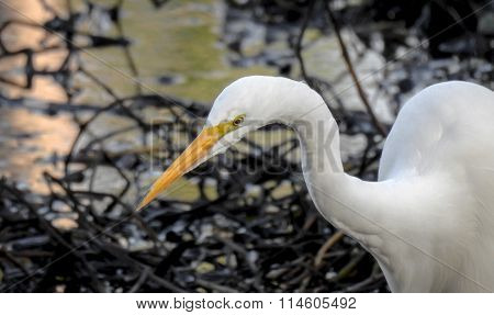 Great Egret At The Lake #2