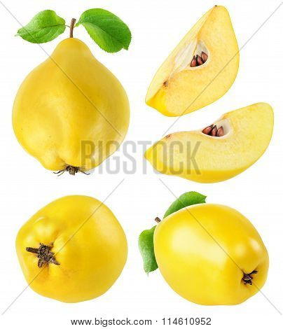 Quince Fruits Collection