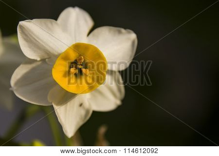 White and yellow flower field