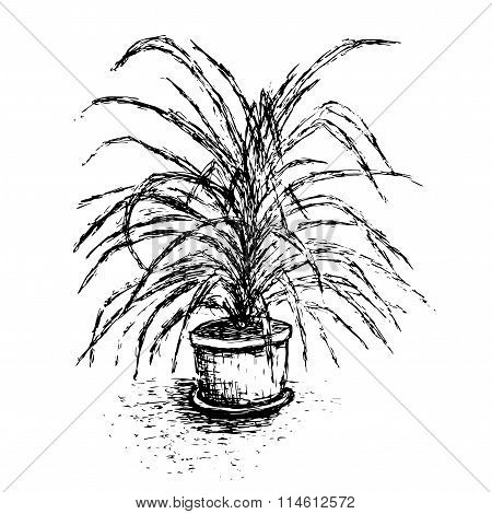 House Plant In Flower Pot Isolated On White Background. Palm Tree Ink Sketch. Hand-drawn element