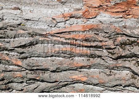 Background From Poplar Bark