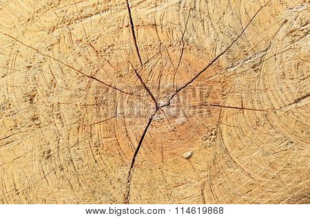 The Sawn Tree And Its Year Rings