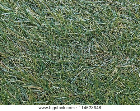 Detail Plastic Grass