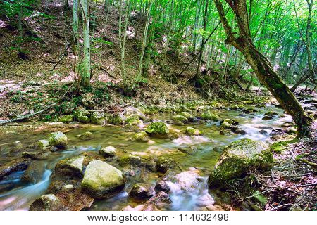 Mountain Stream Among The Trees Of Beech And Hornbeam.