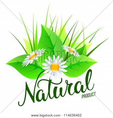 Original Hand Lettering Natural And Eco Design Elements. Handmade Calligraphy. Organic, Bio, Natural