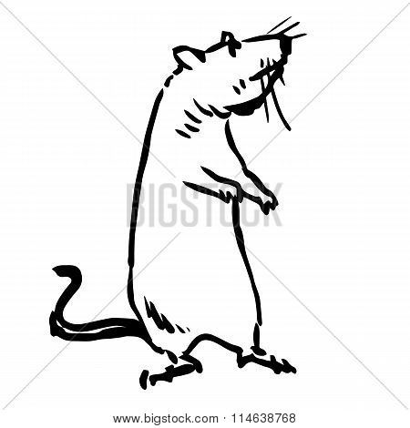 Freehand Sketch Illustration Of Rat, Mouse