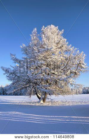 Beautiful winter landscape with a frozen tree in sunshine