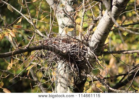 Convolute Nest On Tree