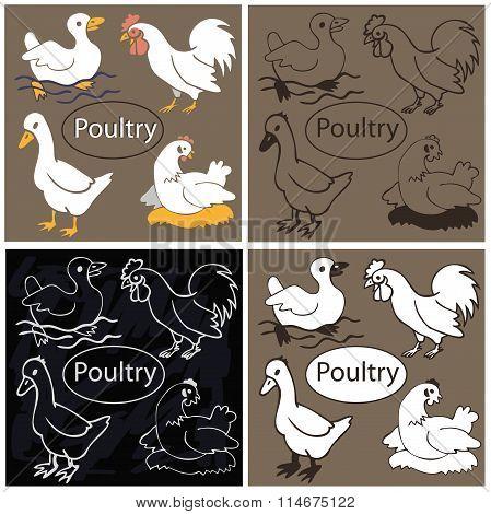 Poultry On Dark Background
