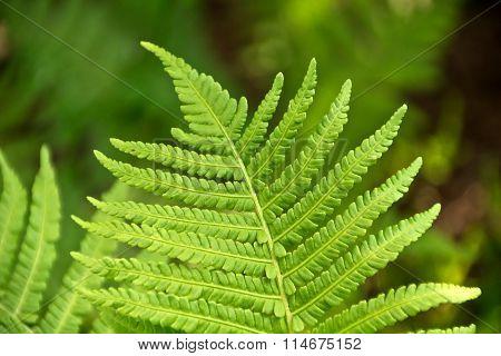 Beautiful fern leaves
