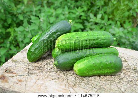 Harvest cucumbers