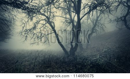 Mystical Autumn Forest With Green Fog In The Morning