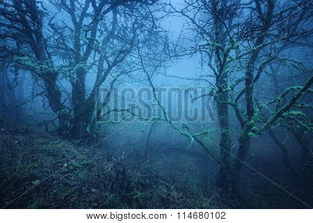 Magic Tree In Mysterious Autumn Forest In Blue Fog