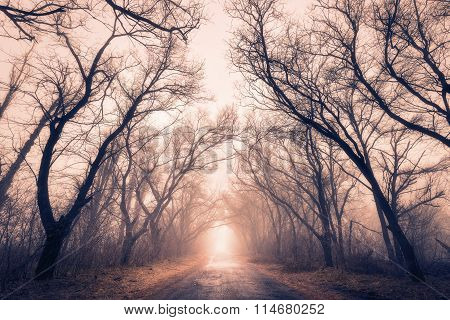 The Road Passes Through A Mysterious Autumn Forest With Fog