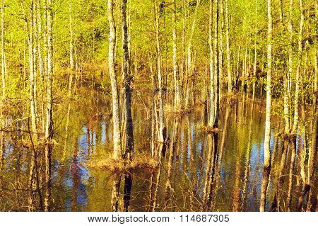 Flooded Forest at Spring