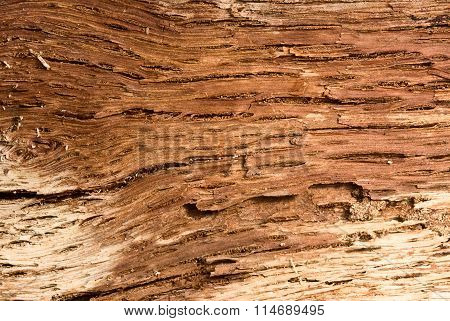 Macro Of Interior Bark Structure