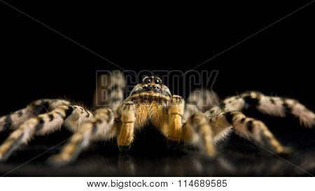 Spider Ready For Attack