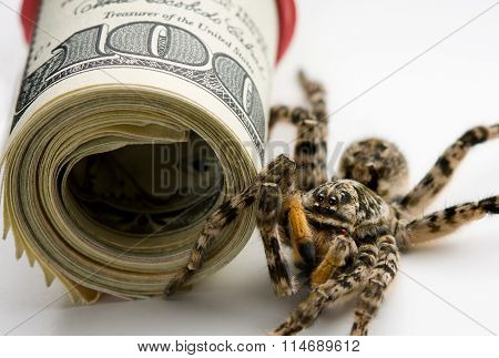 Danger Stand Guard - Poison Spider And Money Roll