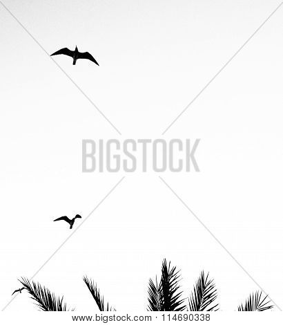 Birds Flying Over A Palm Tree