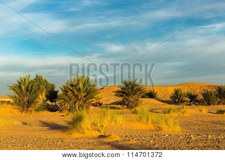 palm trees in desert, morning