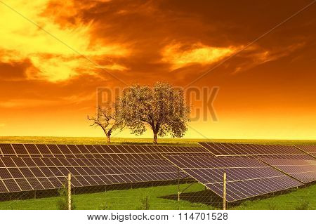 Solar energy panels before trees and sunset sky