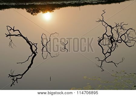 Sunken Tree Branches Reflecting In The Water.