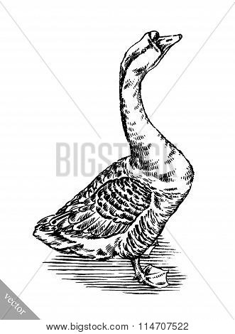 engrave ink draw isolated duck illustration