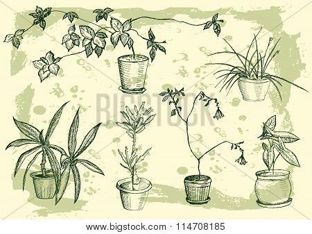 flowers, houseplant, sweet home