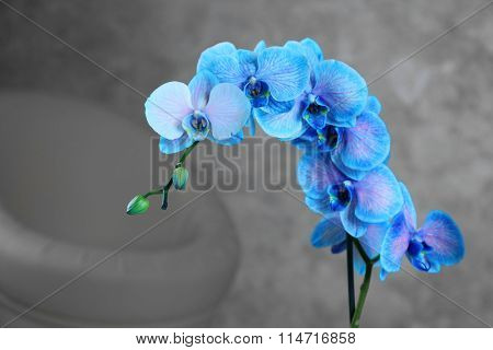 Beautiful blue orchid on the floor in the room, close up