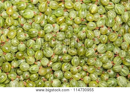 green gooseberry, background
