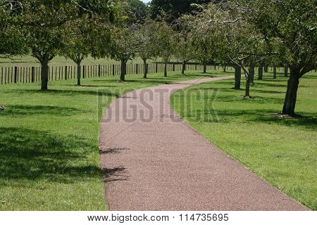 Pathway through the Trees