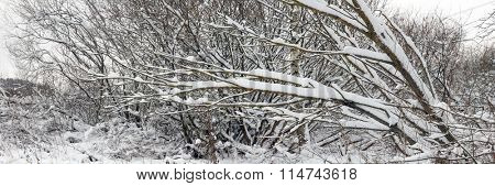 Trees covered with snow after snowfall. Panoramic view.