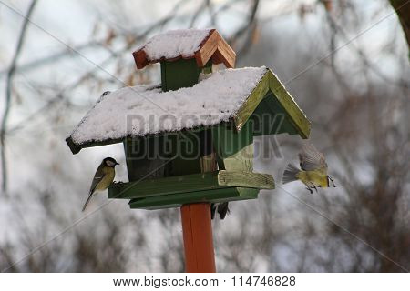Winter feeding of birds