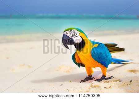 Closeup colorful bright parrot on white sandy beach at tropical island