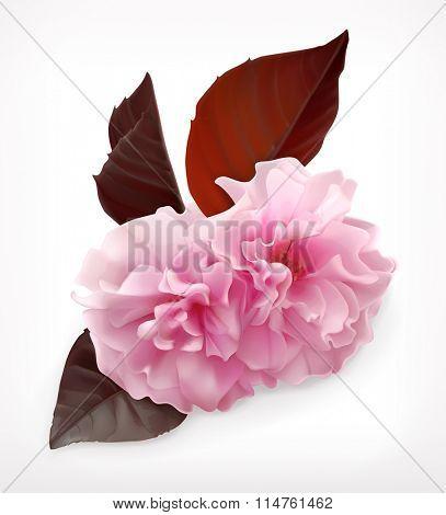 Japanese sakura, cherry blossom flower vector icon