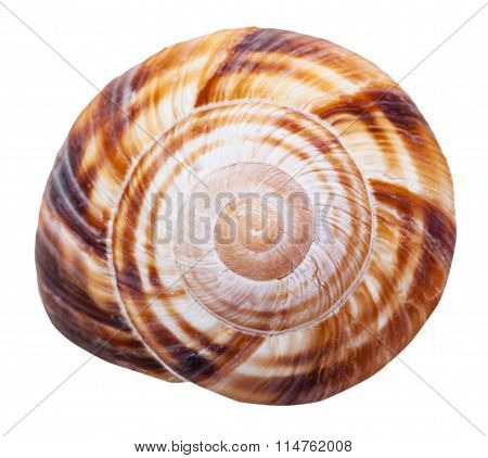 Spiral Mollusk Shell Of Land Snail Close Up