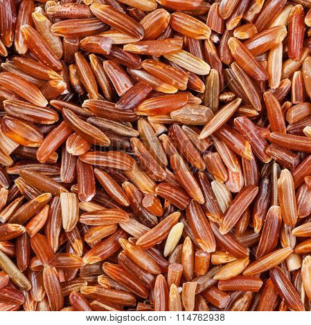 Uncooked Long Grain Red Kernel Rice Close Up