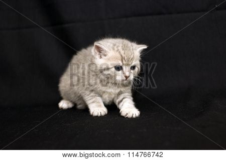 Injured little kitten on a dark background.