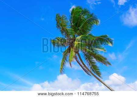 Coconut Tree Against Blue Sky