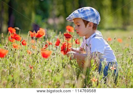 Cute Little Boy With Poppy Flower On Poppy Field