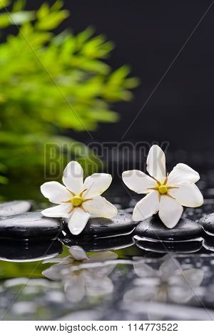 two gardenia with candle on black pebbles