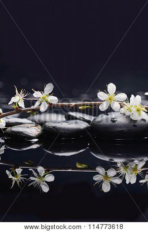 Set of, sakura flowers with therapy stones