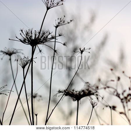Sunset landscape with over dry grass .