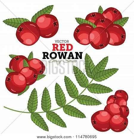 Rowan Set, Vector.
