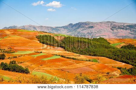 Chinese terrace farm with red soil