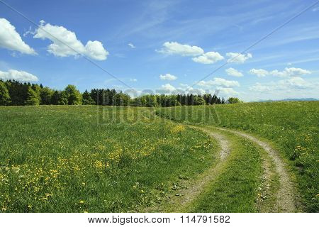 Winding Way In Buttercup Meadow, Blue Sky With Clouds