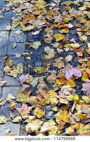 Autumn leaves on pavement