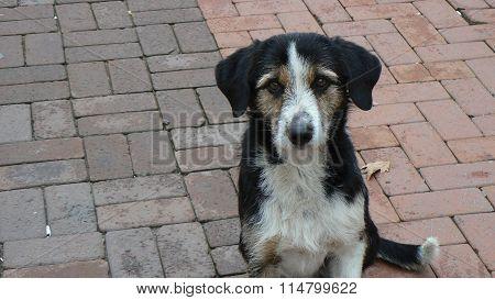Emotional dog