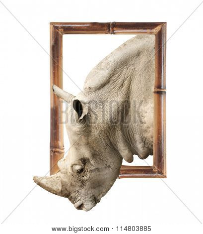 Rhinoceros in bamboo frame with 3d effect. Isolated on white background